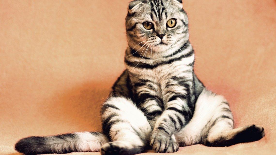 Stylowe i nowoczesne meble dla kotów