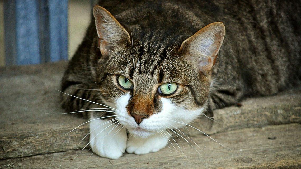 Jakie legowisko będzie najlepsze dla mojego kota?